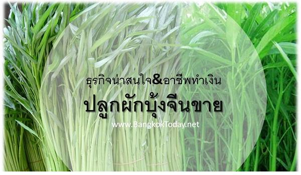 ธุรกิจเสริม ปลูกผักบุ้งจีนขาย ปลูกง่าย ขายได้ทั้งปี
